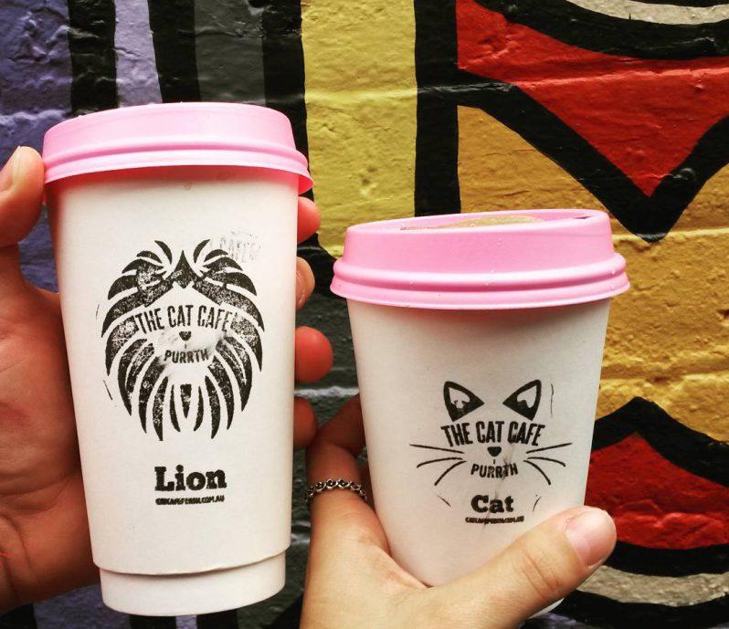 Kaffee vom Katzencafé Purrth in Subiaco