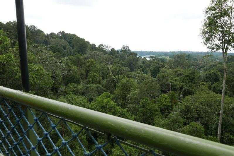 Aussicht vom Tree Top Walk