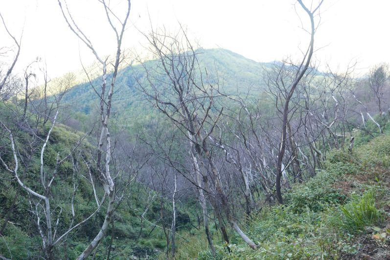 Bizarre Landschaft auf dem Weg nach unten
