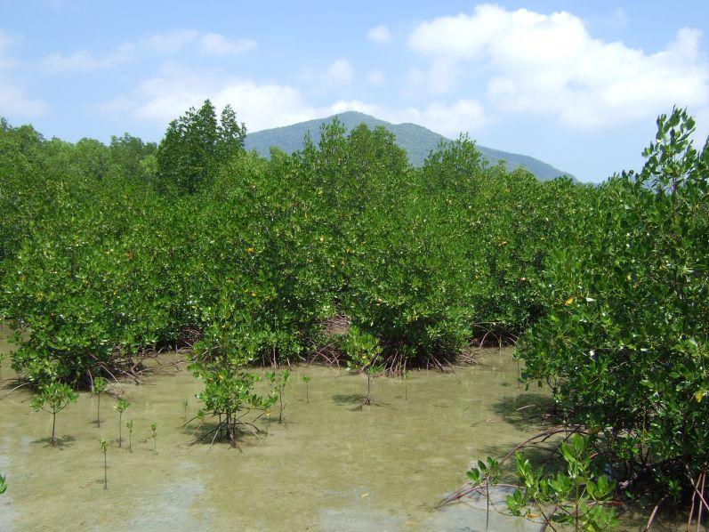 Mangroven_Karimunjawa_travel2eat (5)