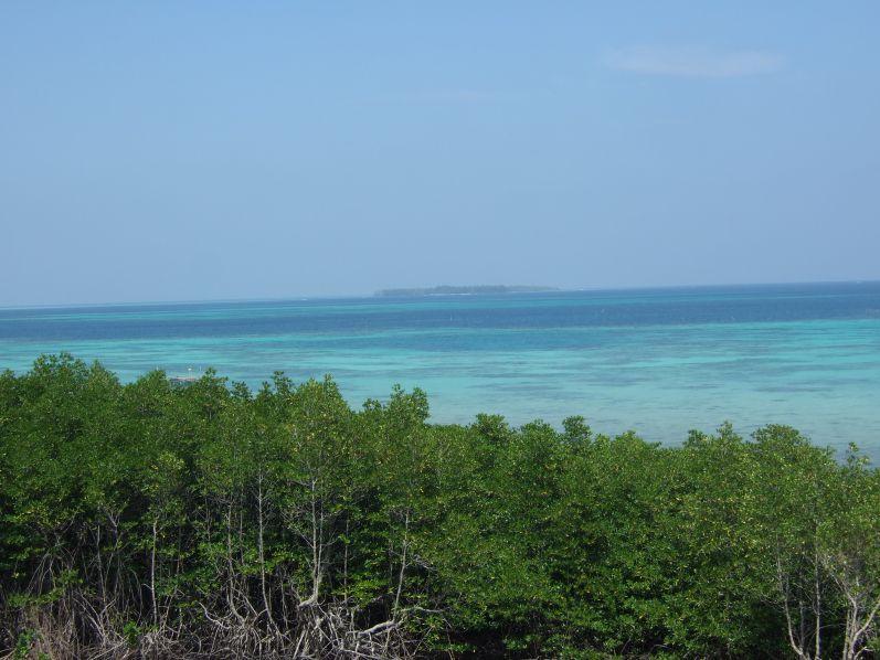Auf dem Weg zum Mangrove-Trail