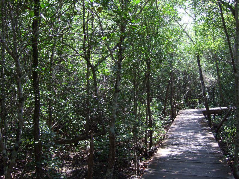 Mangroven_Karimunjawa_travel2eat (7)