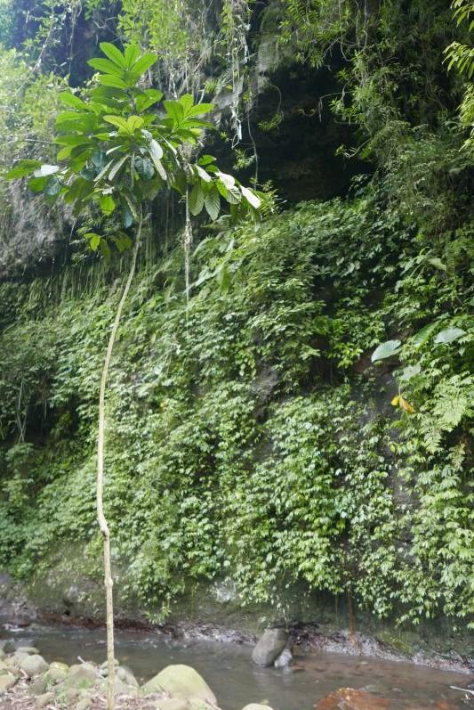 Wasserfall_Banyuwangi_travel2eat (2)