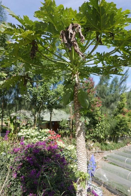Lake_Buyan_Bali_travel2eat (2)