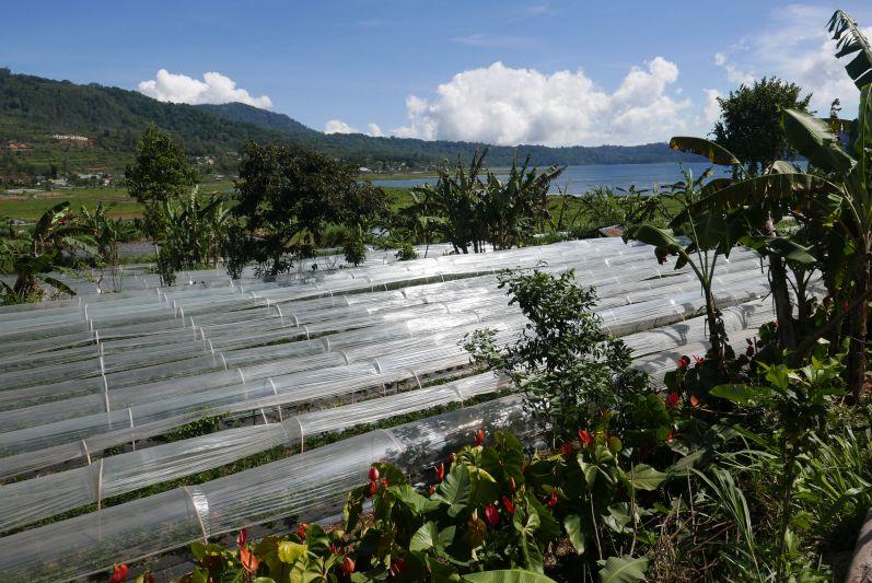 Lake_Buyan_Bali_travel2eat (3)