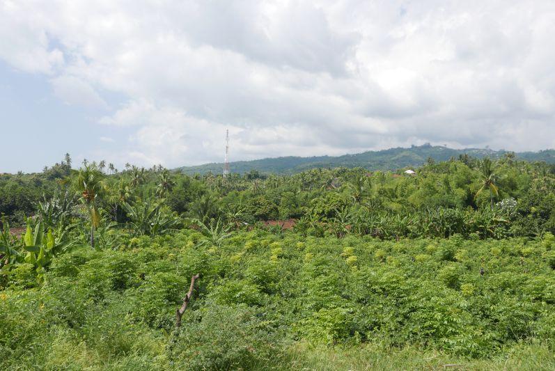 Moped_Tag_1_Bali_travel2eat (3)
