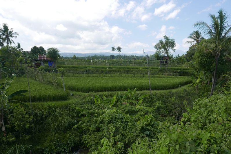 Moped_Tag_1_Bali_travel2eat (4)