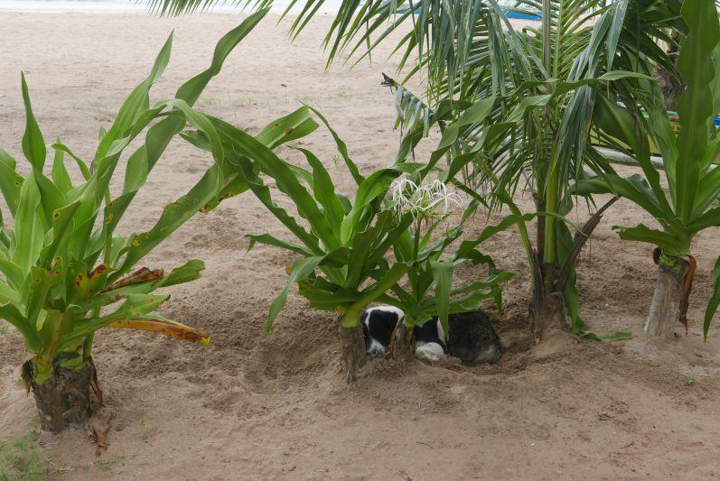 Hund_Philippinen_travel2eat (1)
