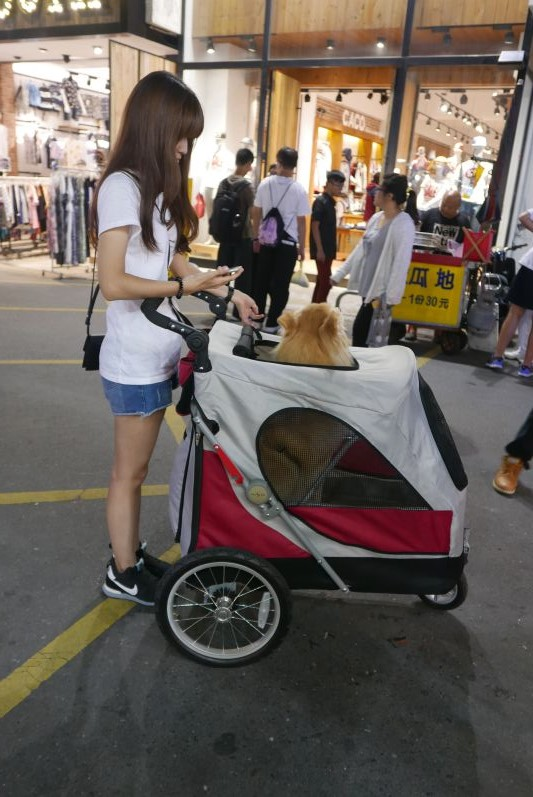 Hundewagen_Nachtmarkt_Yilan_travel2eat