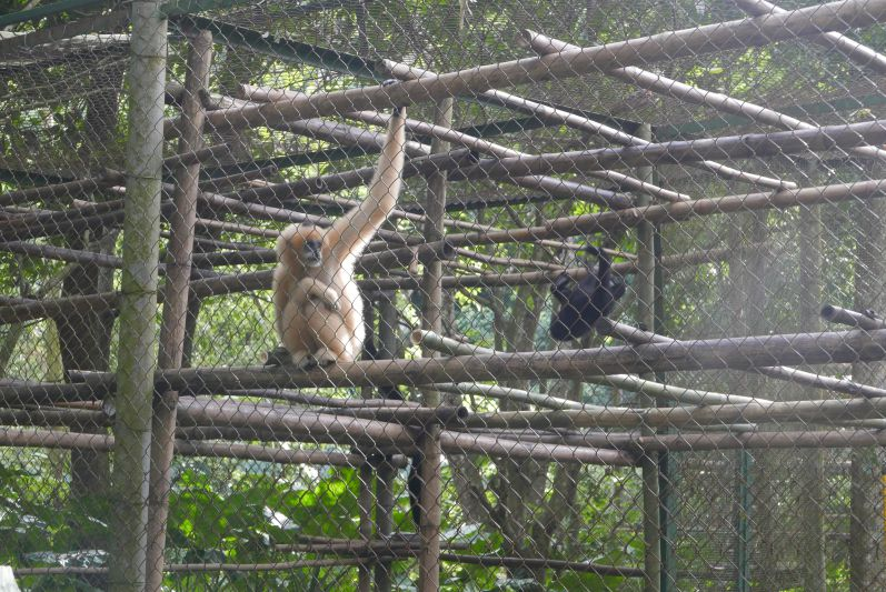 Endangered_Primate_Rescue_Center_Cuc_Phuong_Ninh_Binh_travel2eat (1)