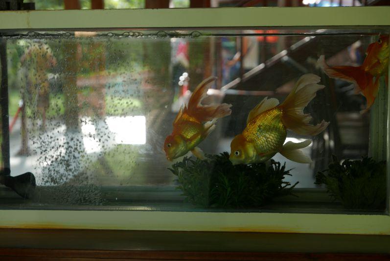 Lustige Fische im Haus