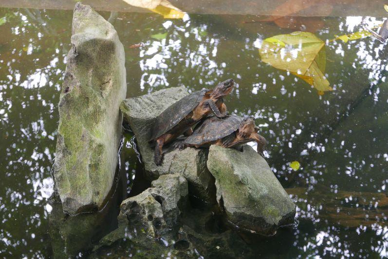 Turtle_Conservation_Center_Ninh_Binh_travel2eat (1)