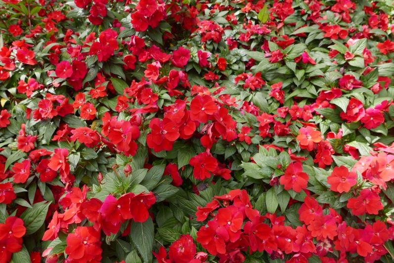 Flowerpark_Dalat_travel2eat (1)