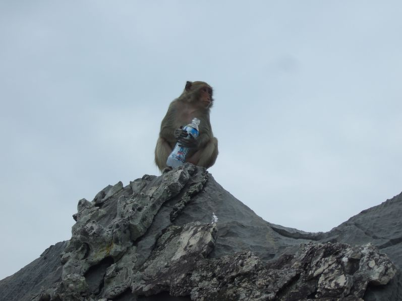 Monkey_Island_Lan_Ha_Halong_Tour_travel2eat (1)