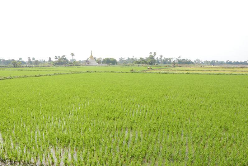 Inwa_Mandalay_Myanmar_travel2eat (4)