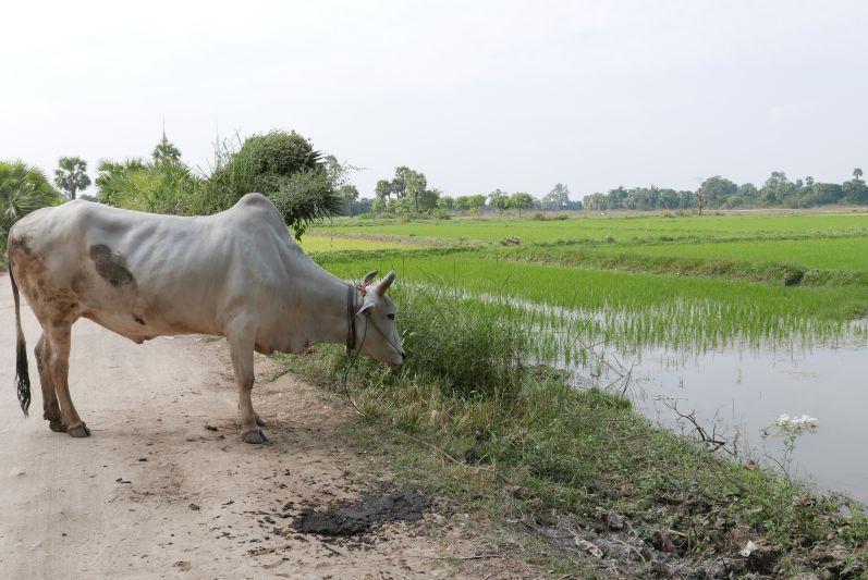 Inwa_Mandalay_Myanmar_travel2eat (5)