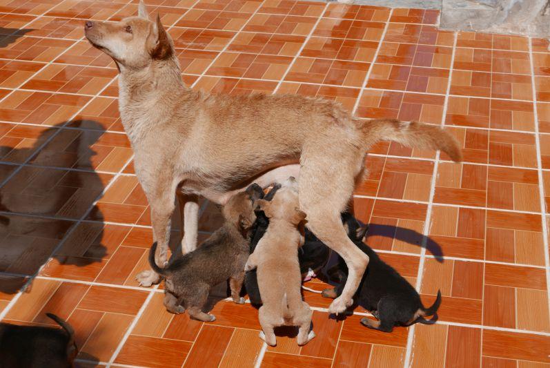 Hunde_tempel_Inle_See_Myanmar_travel2eat