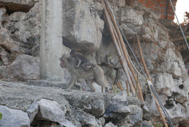 Affen_Berg_Killing_Cave_Battambang_travel2eat (1)