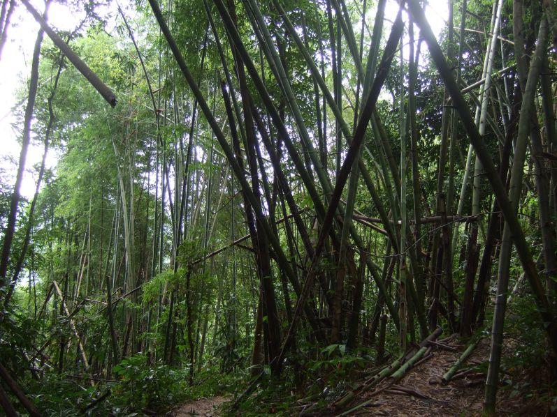 Der laotische Dschungel