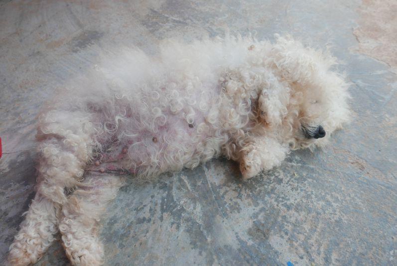 Es gibt viele Hunde in Asien, aber dieser hier mit Abstand einer der niedlichsten