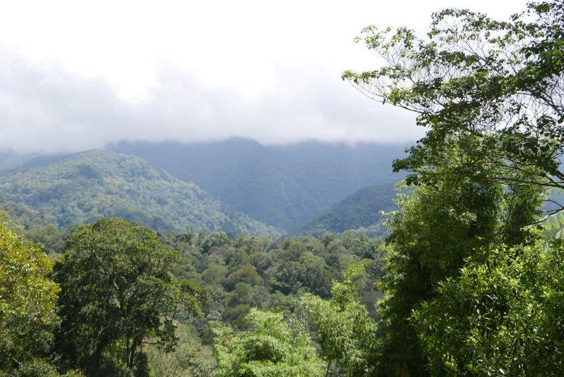 Kinabalu Park im Norden von Malaysia/Borneo
