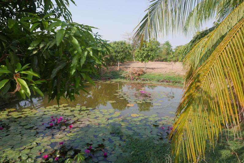 Seerosenteich_Bamboo_Train_Halt_Battambang_travel2eat