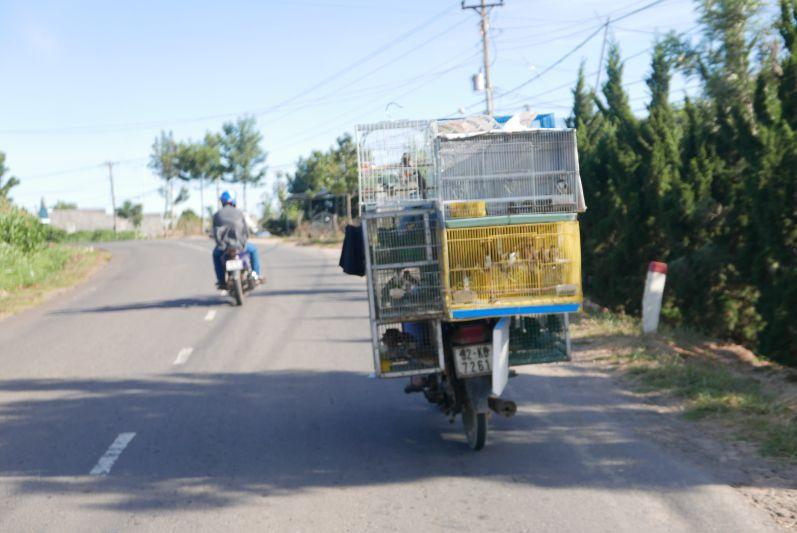 Mopedfahrer in Dalat (Vietnam)