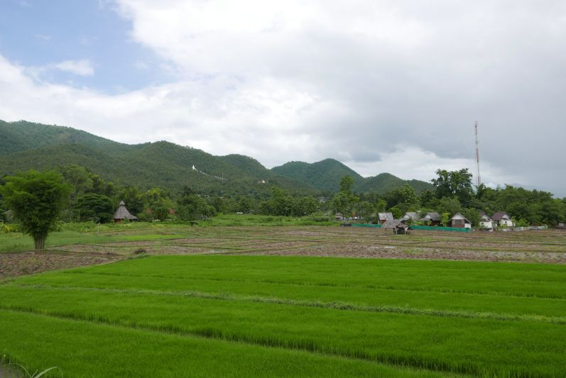 Reisfeld in Pai (Thailand)