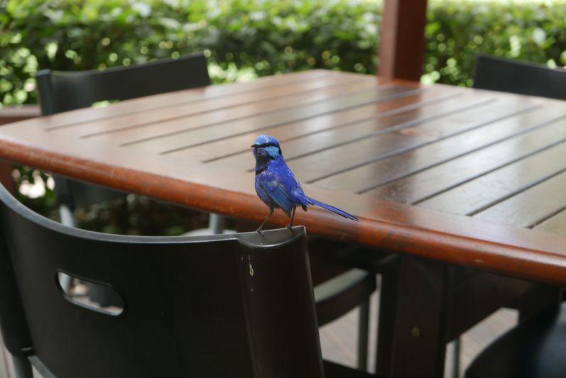 Dieser hübsche Vogel durfte leider nicht rein
