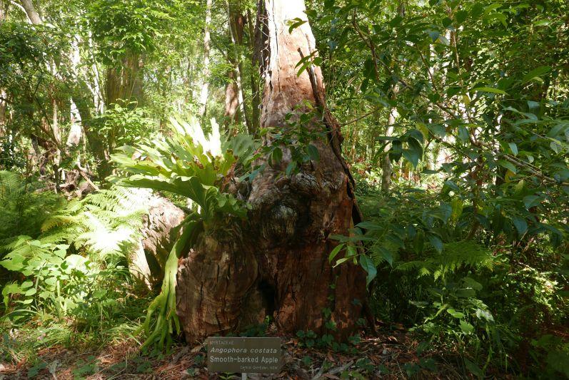 botanic_garden_coffs_harbour_travel2eat-1