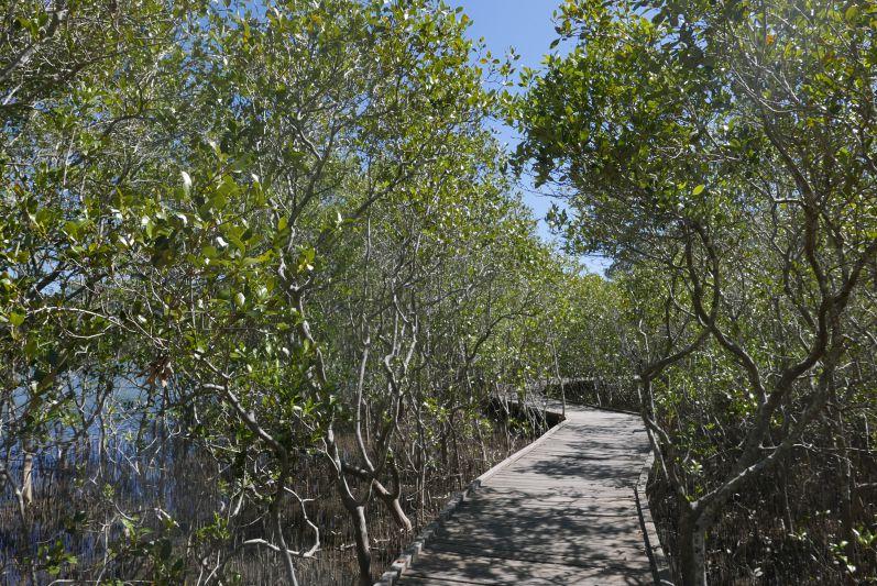 botanic_garden_coffs_harbour_travel2eat-2