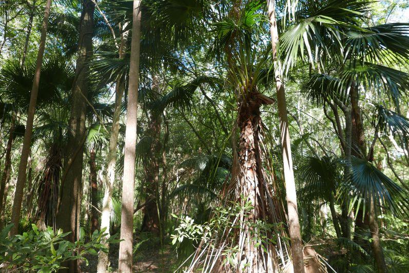 botanic_garden_coffs_harbour_travel2eat-4