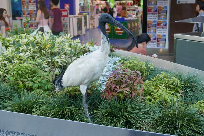 Vogel im CBD