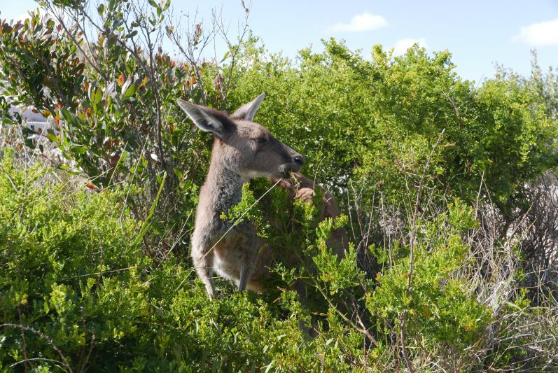 cape_le_grand_nationalpark_esperance_travel2eat-3