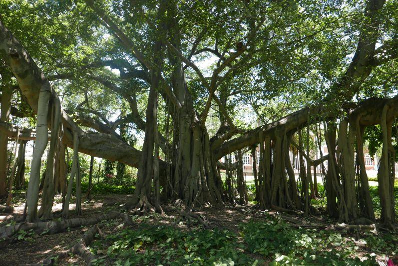 city_botanic_gardens_brisbane_travel2eat-1