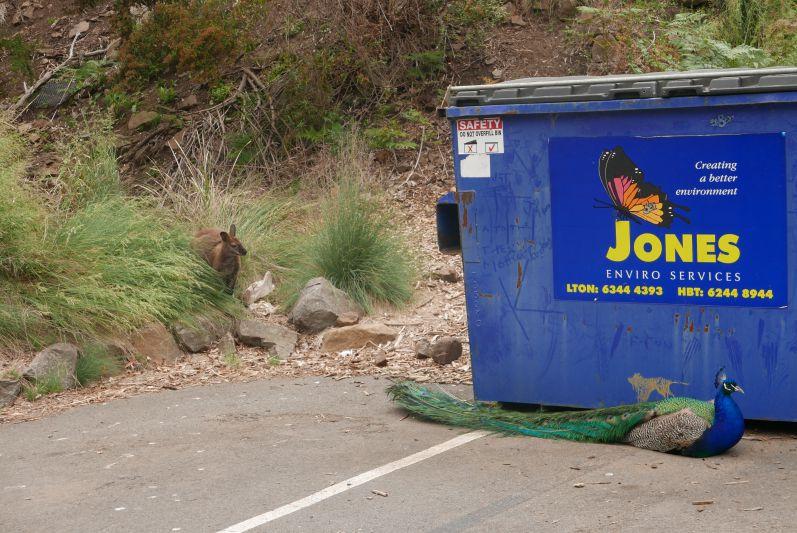 cataract_gorge_nationalpark_launceston_tasmanien_travel2eat-7