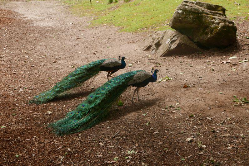cataract_gorge_nationalpark_launceston_tasmanien_travel2eat-8