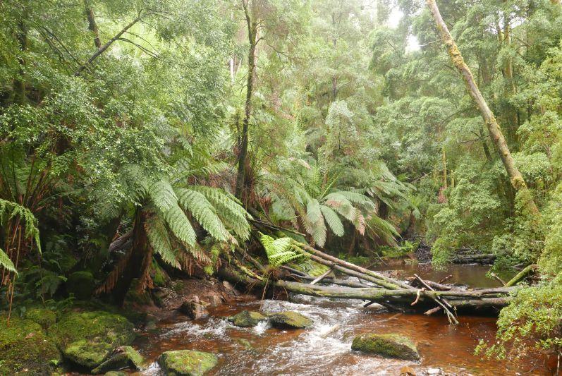 nelson_falls_tasmanien_travel2eat-1