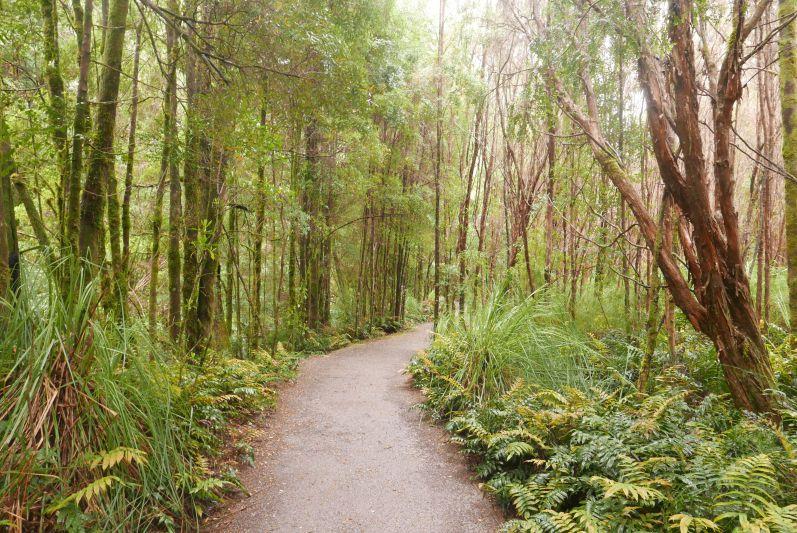 nelson_falls_tasmanien_travel2eat-3