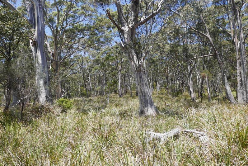 south_bruny_nationalpark_tasmanien_travel2eat-2
