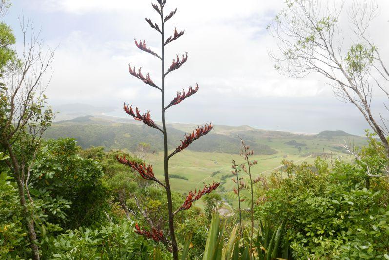 Bream_Head_Scenic_Reserve_Nordland_Neuseeland_travel2eat (2)