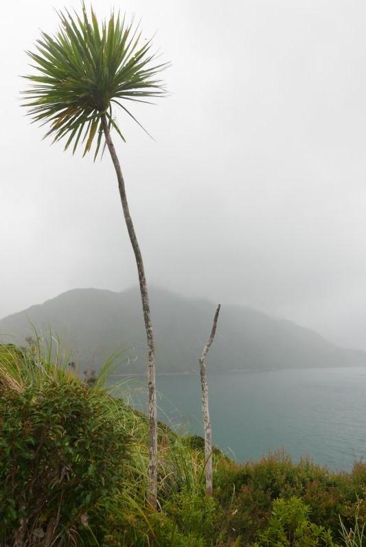 Bream_Head_Scenic_Reserve_Nordland_Neuseeland_travel2eat (7)