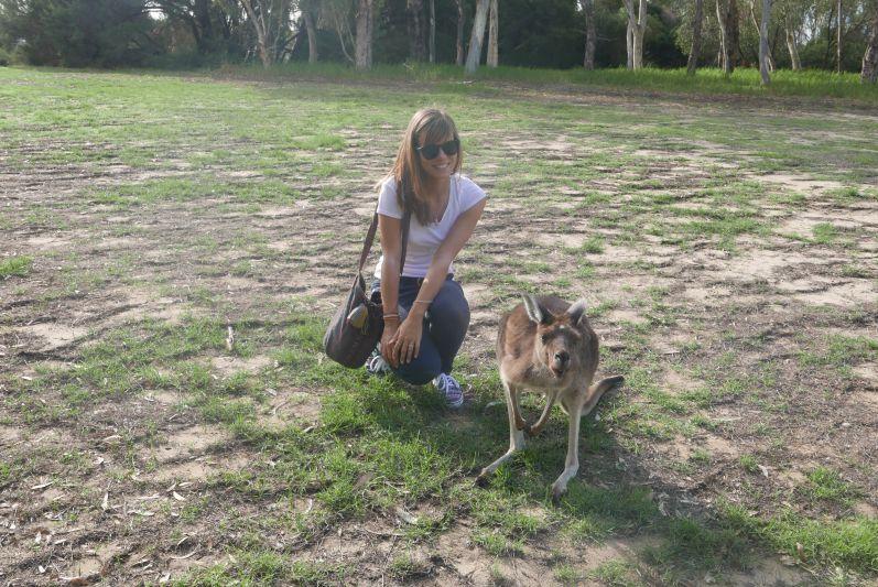 Kängurus auf Heirisson Island mitten in Perth