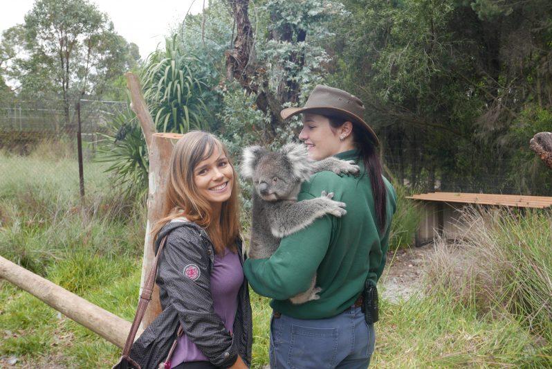 Unseren allerersten Koala haben wir im Craversham Wildlife Park gesehen