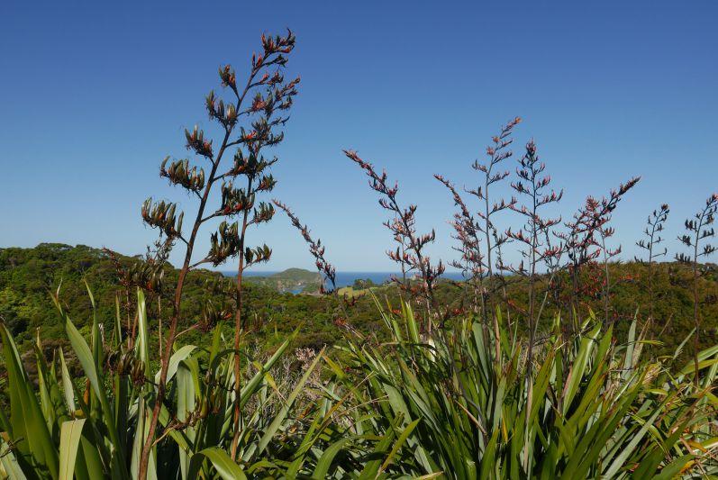 Ngunguru_Northland_Neuseeland_travel2eat (2)