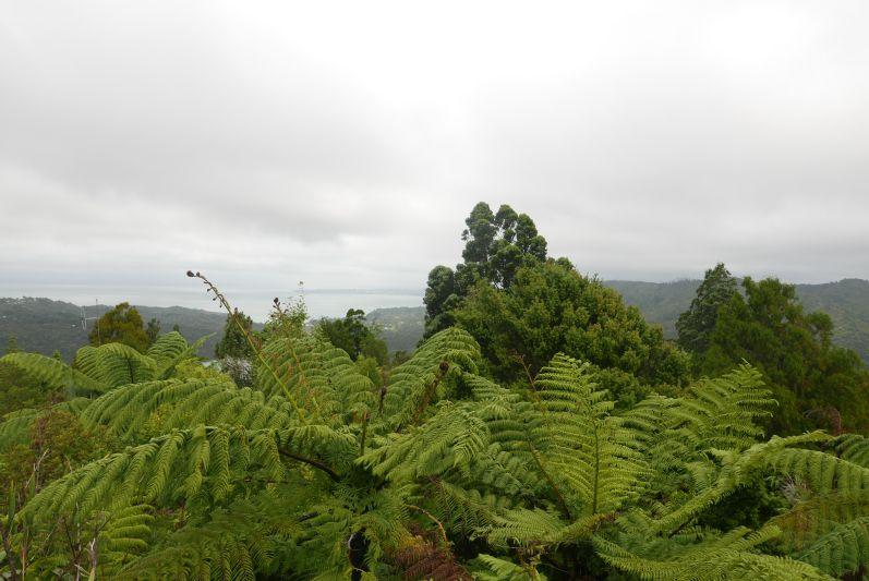 Waitakere_Ranges_Park_Auckland_travel2eat (4)