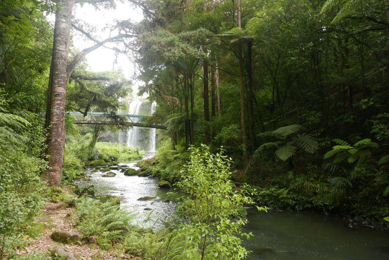Whangarei_Falls_Neuseeland_travel2eat (2)