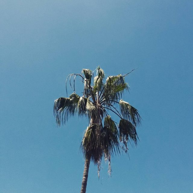 Life is better with palmtrees I really do miss thishellip