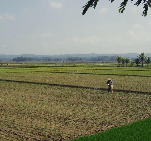 Take me back to asias beautiful paddyfields fernweh southeastasia indonesiahellip
