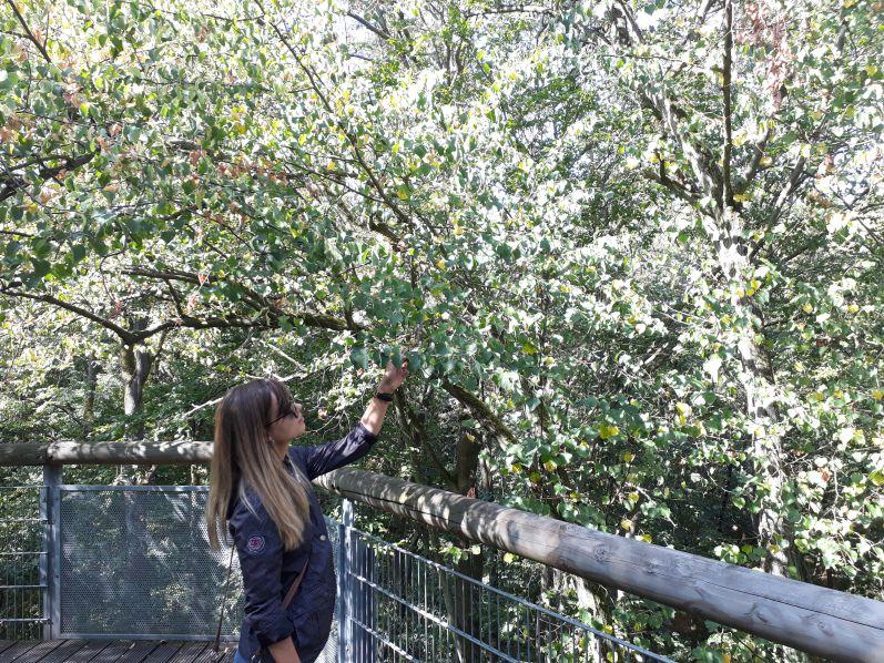 Thüringen entdecken: Baumkronenpfad und Wildkatzen im Nationalpark Hainich